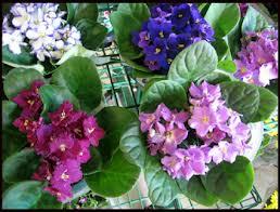 Flowering House Plants successful flowering house plants