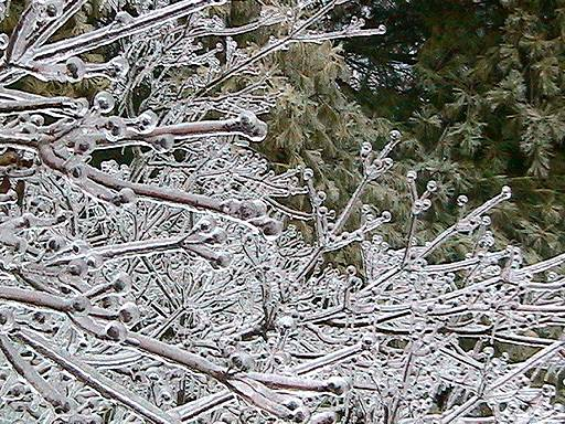 Removing Ice And Snow With Deicers Can Trees Can Cause